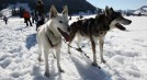 Husky and winter adventure