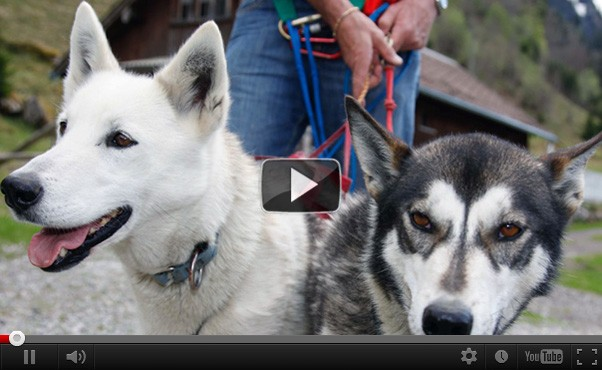 Team Building Leadership mit Huskys